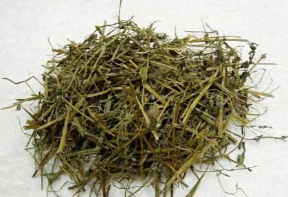 铁树一叶,半枝莲,白花蛇草